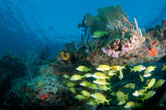 Reef and Fish Composition Stock Images