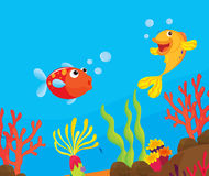 Reef fish illustration Royalty Free Stock Images