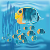 Reef fish, marine fish, beak coralfish, copperband butterflyfish,. Vector a colorful tropical copperband butterflyfish, Chelmon rostratus on blue background Vector Illustration