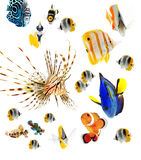 Reef fish, marine fish party isolated on whi