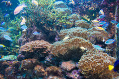 Reef Stock Images