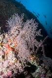 Reef, gorgonian and colored school of fish Stock Photography
