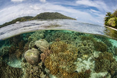 Reef Growing in Shallow Lagoon Stock Images