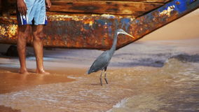 The Reef Heron Hunts for Fish on the Beach of the Red Sea in Egypt. Slow Motion stock video footage
