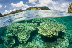 Reef and Islands. A coral reef grows amid the rock islands of Palau. Palau is known for its beautiful coral reefs and world class diving, snorkeling and kayaking Royalty Free Stock Photo