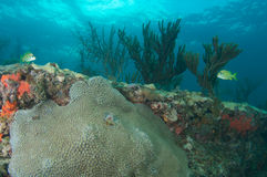 Reef Ledge composition. Royalty Free Stock Photography