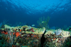 Reef Ledge composition. Royalty Free Stock Photo