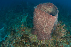 Reef Ledge composition. Stock Image