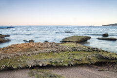 Reef during low tide at Red Sea Royalty Free Stock Photography