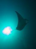 Reef Manta Ray. Shot against sun ball Royalty Free Stock Photography