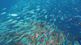 A reef with many different fish stock footage