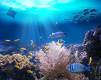 Reef with marine animals. 3D illustration. Ocean underwater with marine animals. 3D illustration Stock Images