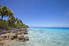Reef and palm tree on blue lagoon Royalty Free Stock Images