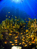 Reef & Rays Stock Images