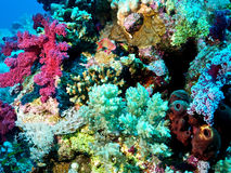 Reef of Red Sea. Biodiversity of Red Sea, Egypt royalty free stock image
