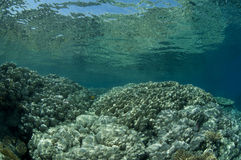 Reef, red Sea, south Sinai, Egypt. Reef and clear water, red Sea, south Sinai, Egypt Royalty Free Stock Photo