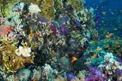 Reef Scene Royalty Free Stock Photo