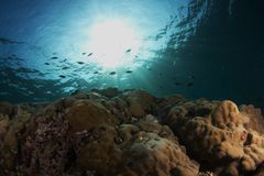 Reef scene at Ras Korali Stock Image