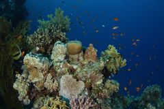 Reef scene - Red Sea Stock Image