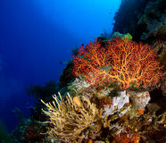Reef Scene Royalty Free Stock Photography