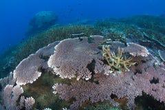 Reef seascape Stock Photos