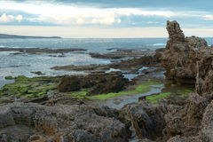 Reef on the seashore. Reef on seacaost , green moss, angle sea, south australia Stock Photos