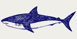 Reef Shark. Doodle style. Vector stock illustration