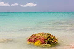 Reef sticking out of Caribbean sea. Big colorful piece of reef sticking out of the ocean stock photos