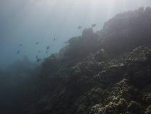 Reef in the sun Stock Photo
