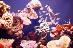 Reef tank, marine aquarium. Blue aquarium full of plants. Tank filled with water for keeping live underwater animals stock photo