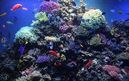 Reef tank monterey bay aquarium. This is a photo of a coral reef tank at the monterey bay aquarium in monterey, california Stock Images