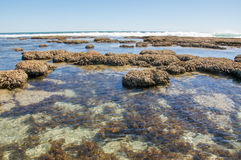 Reef and Tide Pools at Blue Holes Stock Photos