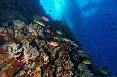 The reef under the ship - Red Sea Stock Photos