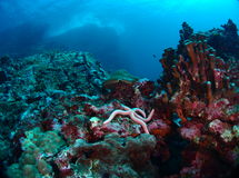 Reef under waves Stock Image