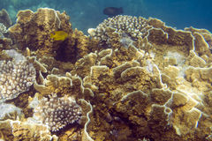 Reef Royalty Free Stock Images