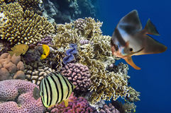 Reef with a variety of hard and soft corals. And tropical fish Stock Photo