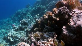 Reef of various corals underwater Red sea. stock video