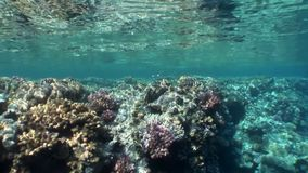 Reef of various corals underwater Red sea. Colorful world of wild marine nature on background of beautiful lagoon. Awesome video of wildlife in Egypt stock footage