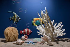 The Reef Royalty Free Stock Images
