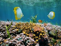 Reef and water surface Stock Photography