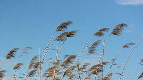 Reef in the wind. On blue sky stock footage