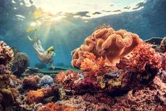 Reef stock image