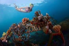 Reef Royalty Free Stock Photos