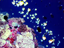 Reef6 Fotografia Stock Libera da Diritti