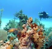 Reeflife de Bahamas Fotografia de Stock