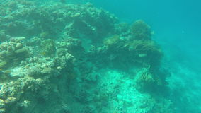 The reefs with corals in the clear sea water stock footage