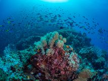 Riotous colours and forms. Misool, Raja Ampat, Indonesia. The reefs in the Misool Marine Protected Area within Raja Ampat, Indonesia, are the richest on earth stock photos