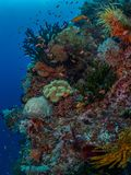 Riotous colours and forms. Misool, Raja Ampat, Indonesia. The reefs in the Misool Marine Protected Area within Raja Ampat, Indonesia, are the richest on earth stock images