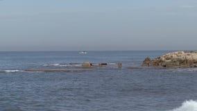 Reefs see Israel stock video footage