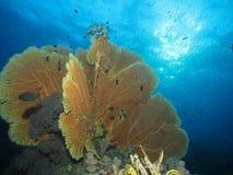 Reefscape Стоковое Изображение RF